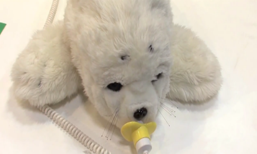 Robotic Seals help to ease emotions