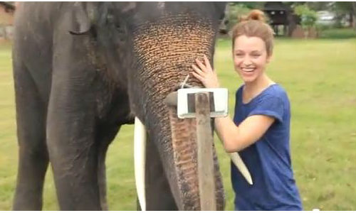 Video: An elephant using Samsung Galaxy Note