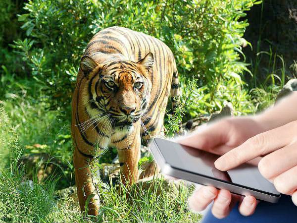 Karnataka Tiger Reserve to have Mobile Veterinary Service