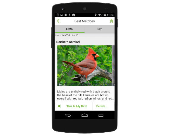New app to identify bird from its chirp