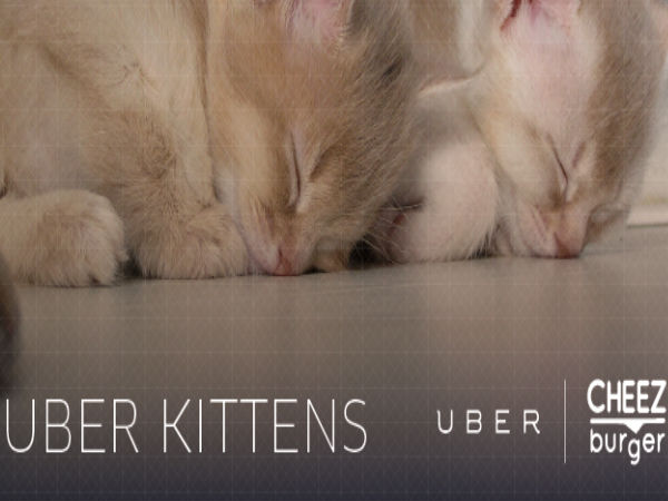 Uber Delivers Kittens on National Cat Day: It's Snuggling Time