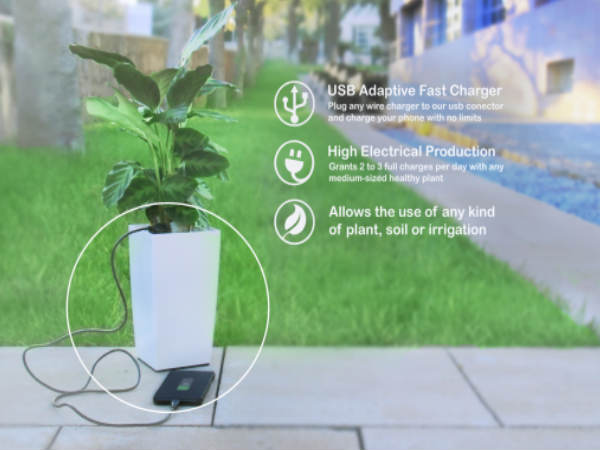 Now Turn Your Plant into a Charging Device: All You Need to Know