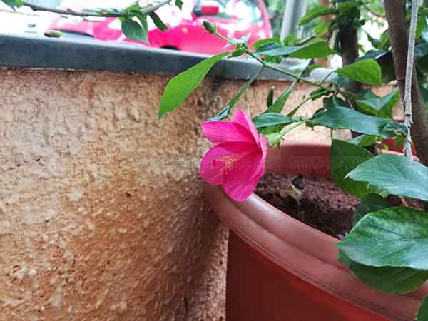 10 Sample Shots show Honor 5C's camera prowess