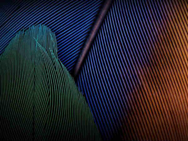 Moto G Wallpaper Images: Moto G5 Plus Wallpaper And Default Ringtones Leak