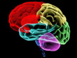 3D-printed 'bench-top' brain a reality soon