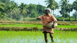 Apply For Kisan Credit Card Online: Step By Step Instructions